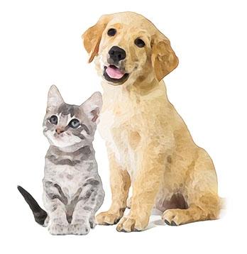 Mazlíčci pes a kočka